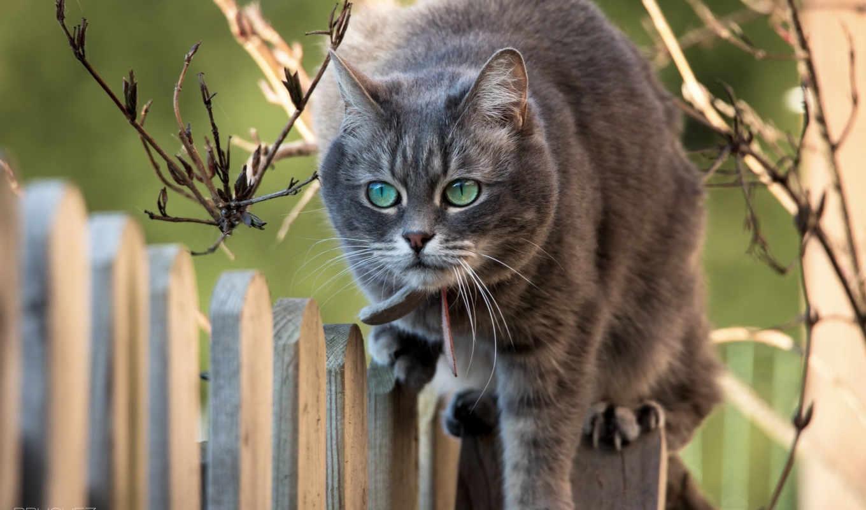 животные, категории, кошка, телефон, animals, забор,