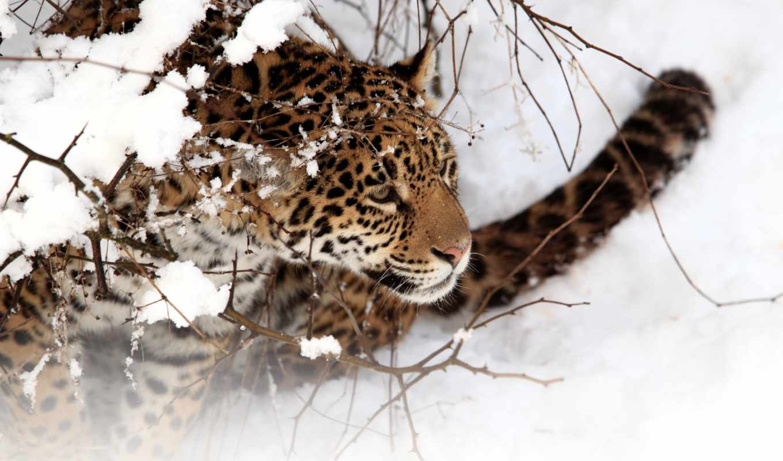 zhivotnye, фоны, животный, водный, зимой, снег, животных,