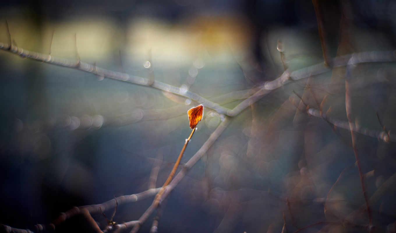 макро, осень, природа, блики, боке, лист,