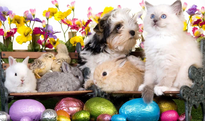 easter, шарики, собака, цветы, цыплята, кролики, пасхальные, щенок,