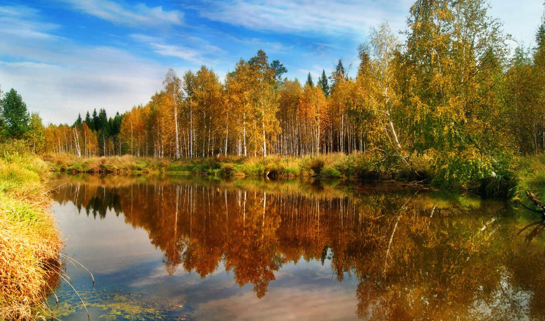 осень, природа, лес, отражения, заставки, water,