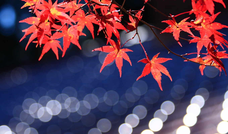 maple, japanese, листья, bokeh, red,