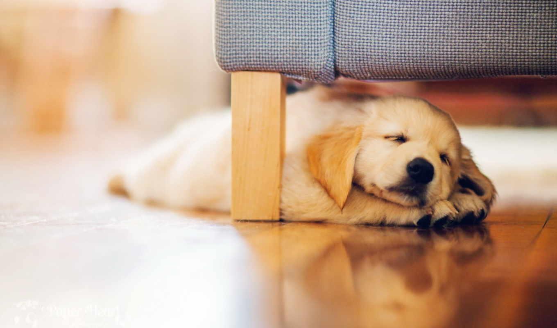 ,щенок, кровать, спит