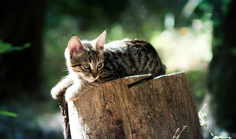 коты, кот, кошки, животные, пушистые, лежать, котик,