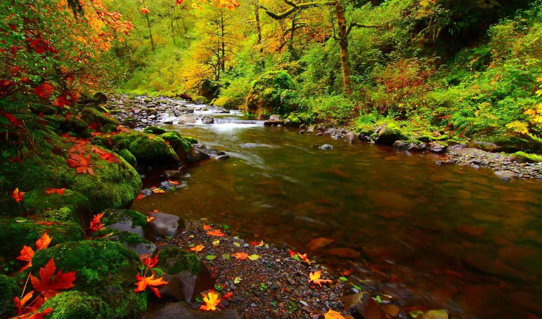 ,, осень, landscape, река, пейзажи,