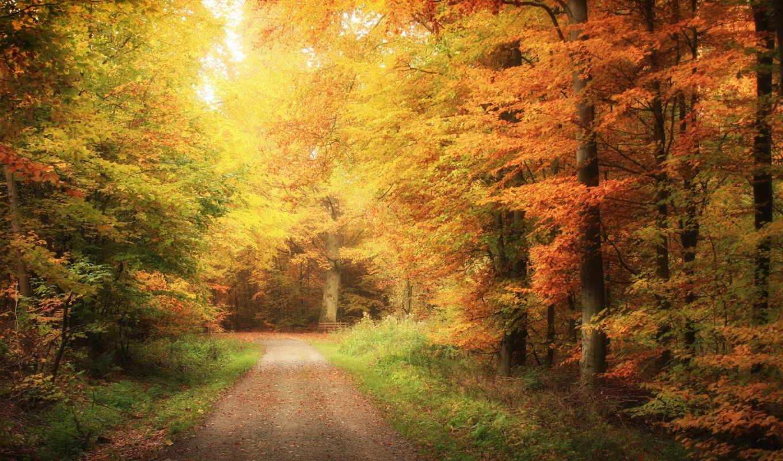 пейзажи -, природа, красивые, дорога, осень, landscape,