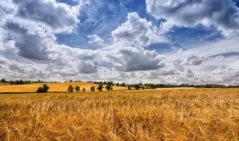 поле, природа, урожай, небо, разделе, осень,