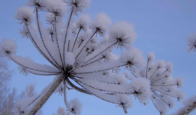 обои, abyss, and, красивые, plant, фотографии, dow
