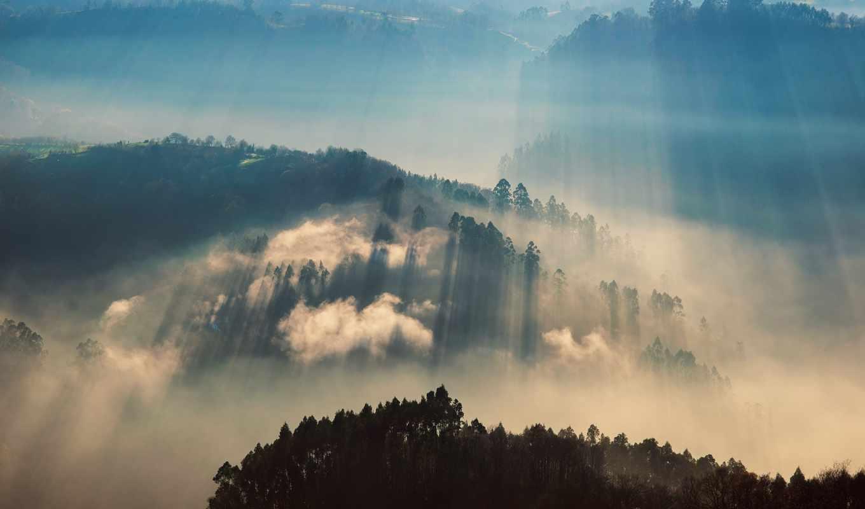 лучи, свет, долина, британия, британская, лес,