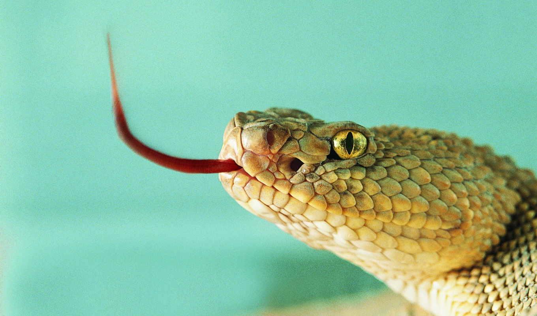 змеи, животные, змея,