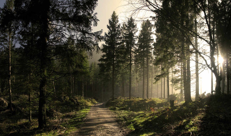 природа, full, картинка,
