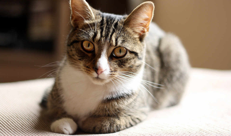 кот, кошки, подборка, красивых, девушек,