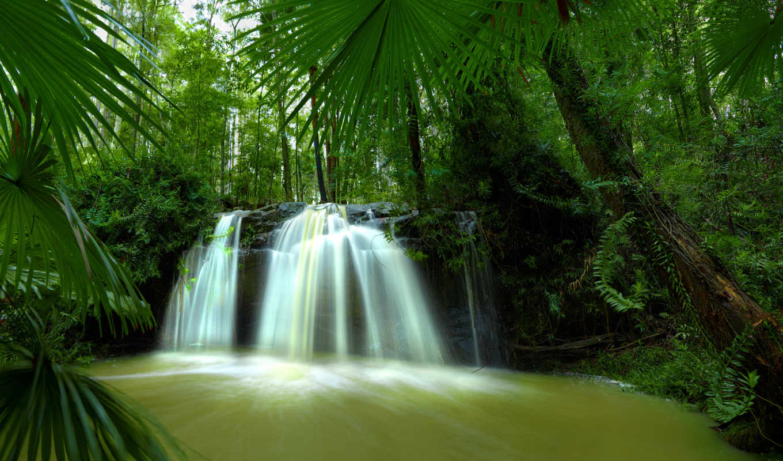 jungle, водопад, камни, взгляд, растительность, ручей, мох,