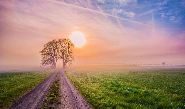 природа, деревя, дорога, поле, sun, утро, туман, рассвет, summer, landscape, трава,