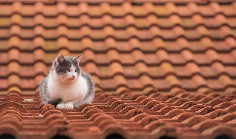 страница, бесплатные, кошки, животных, коты, cats, крыша, пончики,