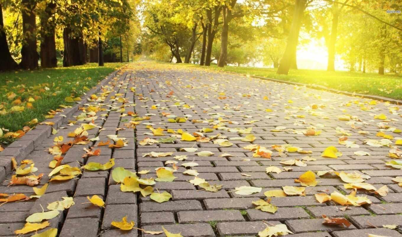 poetry, urdu, декабрь, mohammad, alazzam, park, экран, грустный, yellow, leaf