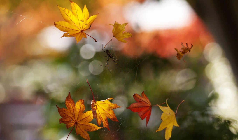макро, осень, паутина, паук, листва, боке, картинка,
