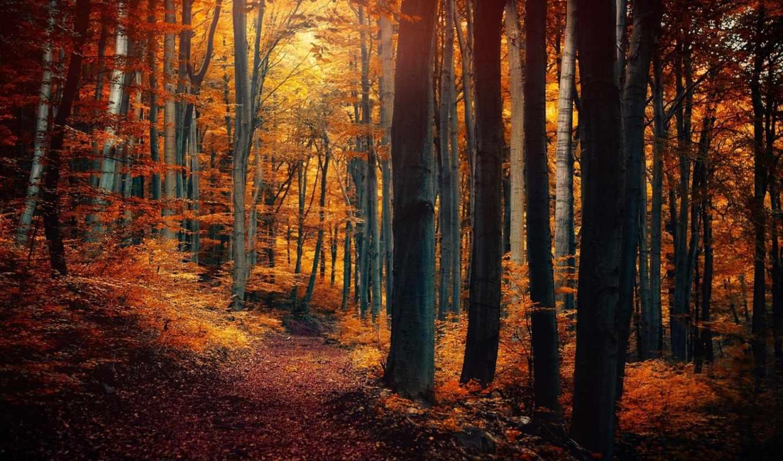 лес, деревья, листья, желтые, природа, осень, картинку, картинка, леса, тропинка, кнопкой, мыши,