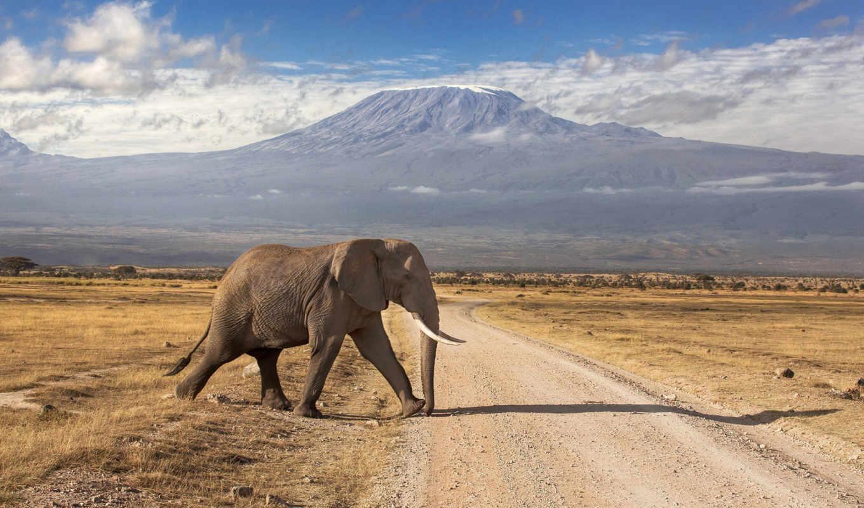 африки, слоны, kenya, парков, kilimanjaro, яndex, mala, национальные, африке, коллекция,
