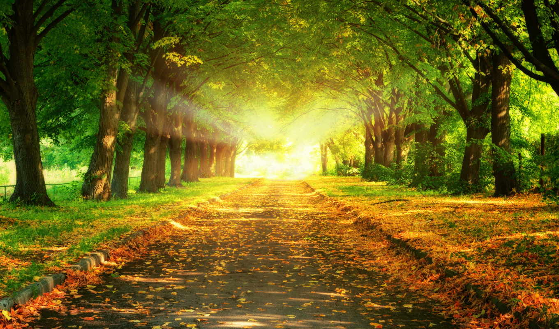деревя, аллея, осень, листва, sun, рисунки, песочница,