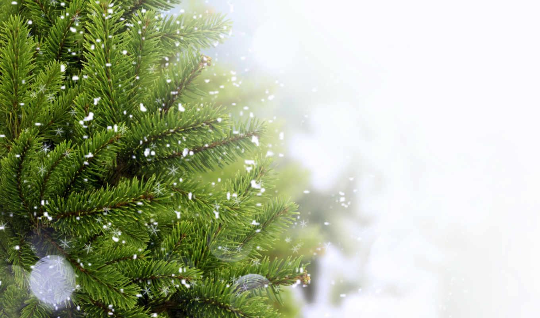 ветка, иголки, снег, елка, смотрите, другие, наступающим, экрана, номером, монитора, похожие,