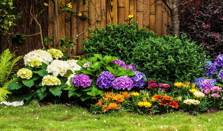 kwiatowa, rabata, paprocie, krzewy,