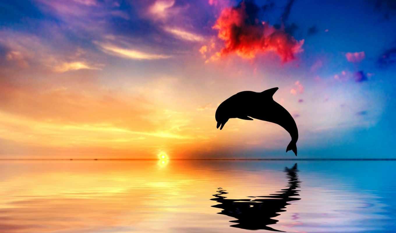 дельфин, стоковые, ocean, выпрыгивает, fone, телефон, море, заставки, неба, коллекция, разнотематическ,
