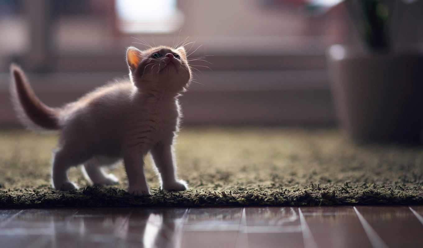 cute, кот, cats, kittens, animals, images, baby,