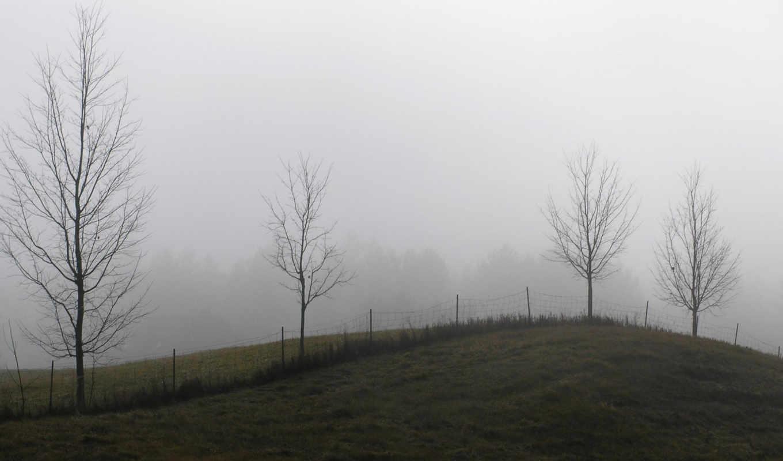 desktop, dewymeadow, trees, dewy, share, meadow, photo, iphone, hill, background, minus,