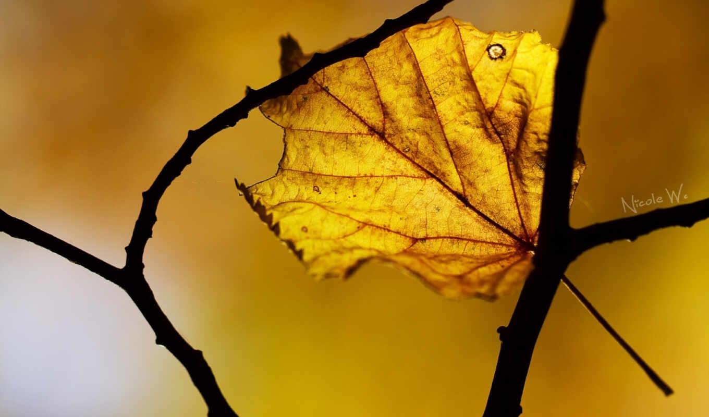 осень, макро, лист,