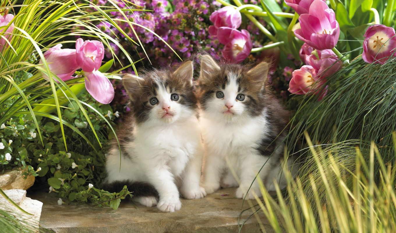 кошки, только, красивые, кот, daily, заставки,