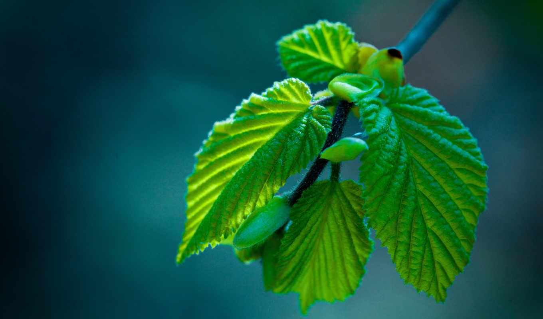 макро, природа, листва, широкоформатные, красивые, branch, бабочки, дек,