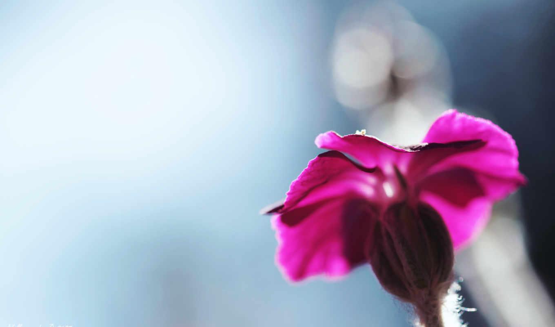 cvety, makro, фотографий, бесплатные, красивые,
