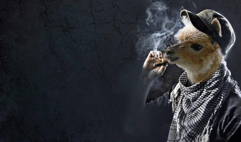 лама, кепка, сигара, пума, smoking, kills, креативные,