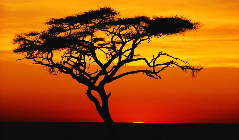 coffee, дерево, time, птица, trees, африка, african, acacia, растения, margin,