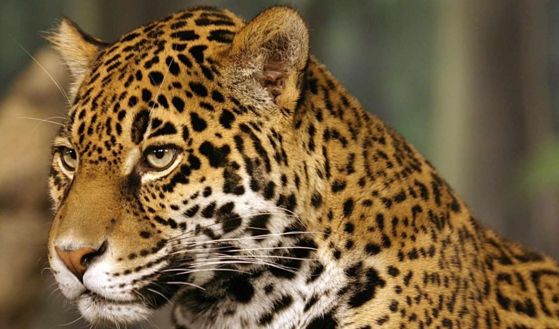 new, они, zoo, jaguar, уезд, регби, milwaukee,