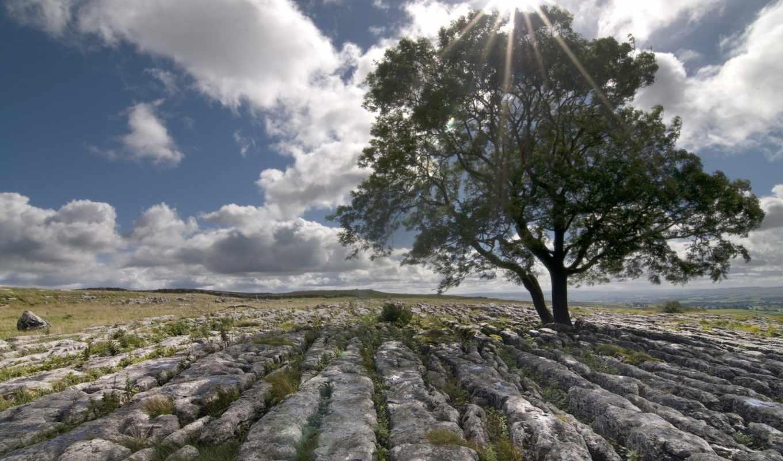 пейзаж, камни, дерево, поле,