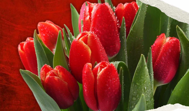 июн, учимся, приготовить, тюльпаны, tulips, цветы, февр,