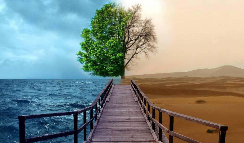 climate, different, пустыня, море, дерево, совершенно, свой,