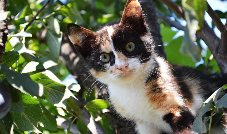 cats, following, keywords, кот, been, this, has, котенок, tagged,