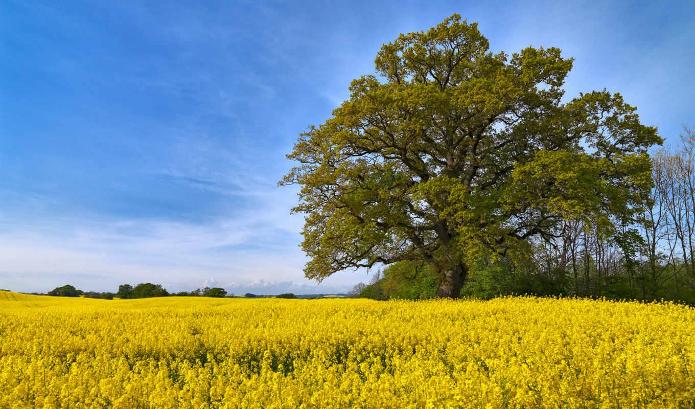 природа, страница, поле, allday, природы, уголками, прекрасными, швеции,