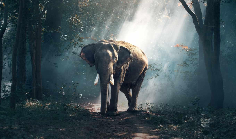 слон, лесу, большим, animals, zhivotnye, слон,,