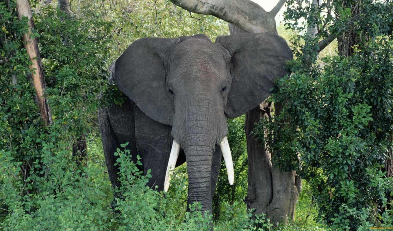 кроссвордиста, разгадывание, помощник, маске, сканвордов, определению, слов, кроссвордов, онлайн, слон, slon,