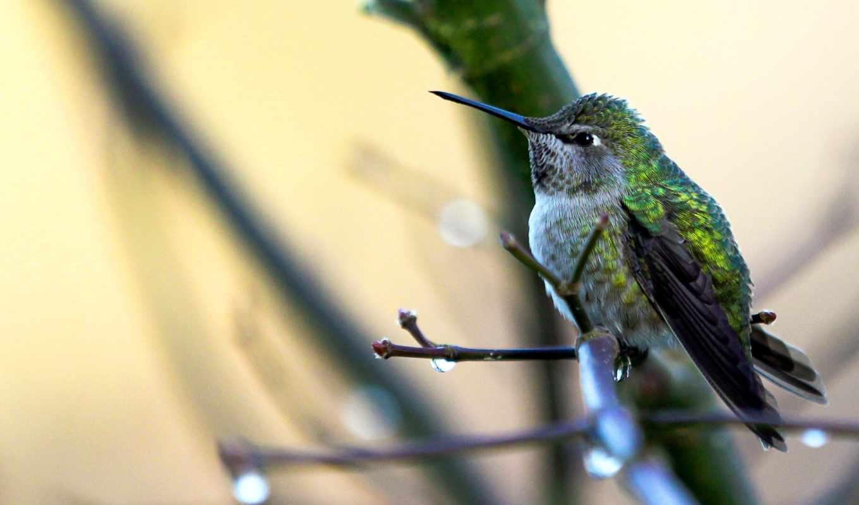 elliott, windows, 摄影家christopher, colibri,