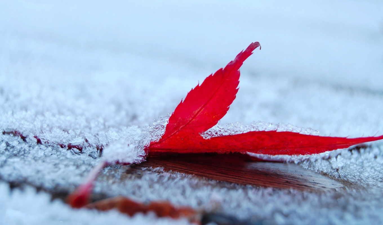 осенью, коллекция, ёль, winter, лисы, девушка,