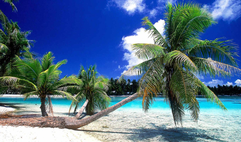 seashore, pb, free,