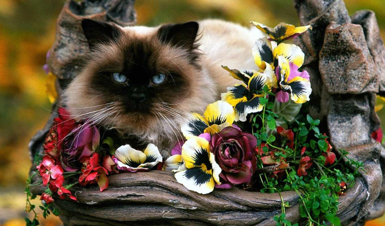 кот, цветах, цветы,