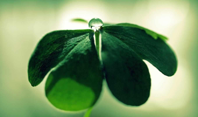 капля, лист, зелень, цветка, центре, макро, картинка,