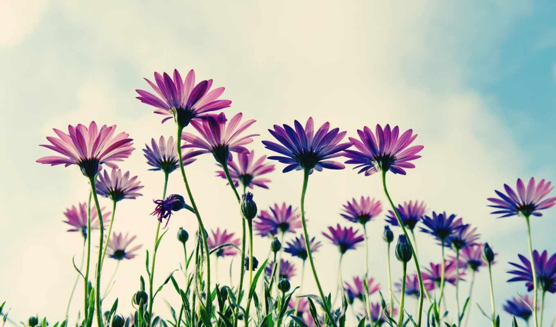 цветы, flowers, sepia, inch, digital,