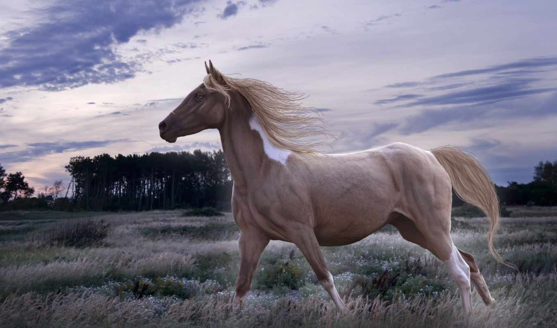 фотопанно, лошадь, заставки, реклама, категории, animal, красивые, день, животные, каждый,